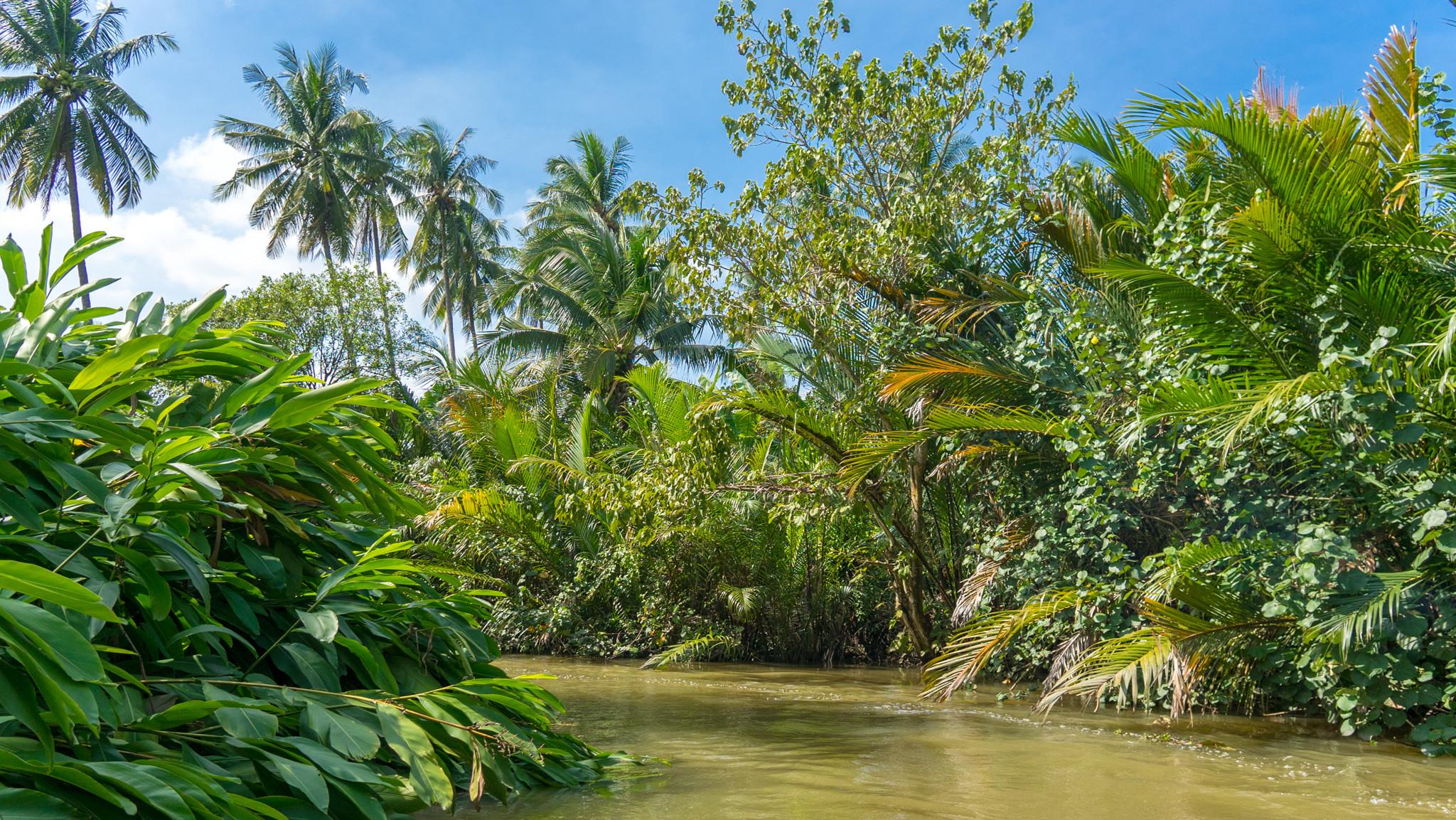 Plantation de cocotiers
