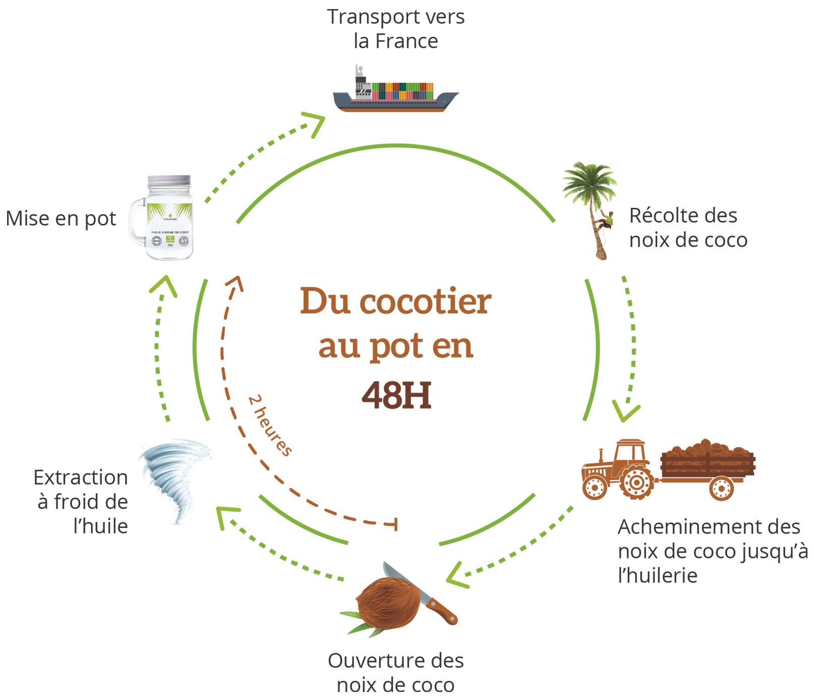Schéma du cocotier au pot en 48h